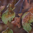 Fall leaves (2) by dfrahm