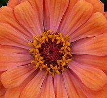 Peach! by Rpnzle