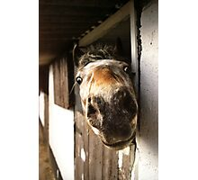 Why the Long Face? Photographic Print
