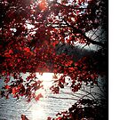 Peaceful sunshine through leaves by Valeria Lee