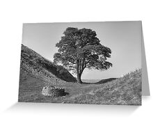 Sycamore Gap Greeting Card