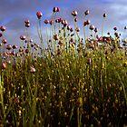 wildflowers by Klaudy Krbata