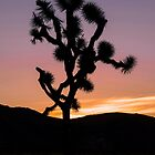 A desert sunset. by philw