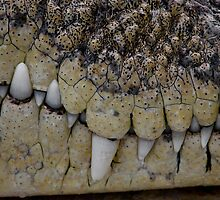 Crocodile Smile by Mark Snelson