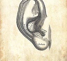 Anatomy of an Ear by Jesse Cain