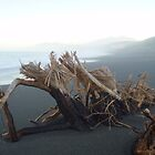 Driftwood by Paul Finnegan