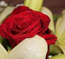 Una rosa per te by StregaNera