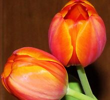 Colorful Tulips by Cynthia48