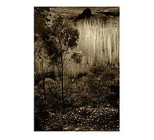 Poplars near Vaughan Photographic Print