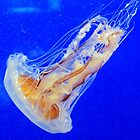 Beautiful Jelly Fish by Cynthia48