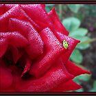 Morning Dew by Elizabeth Burton