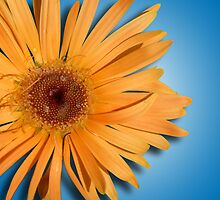 There's just something about a daisy . . . by Bonnie T.  Barry