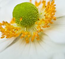 The Heart of Anemone by Leisa  Hennessy