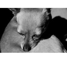 Chico in Spring Sun Photographic Print