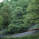 Bluebell Woods between Grasmere and Rydal Waters Lake District England 198405200038 by Fred Mitchell