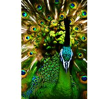 Portrait of a Peacock Photographic Print