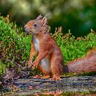 squirrel by Nicole W.