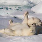 Polar Bear Cubs by Steve Bulford