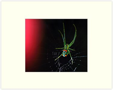 orchard orbweaver by J.K. York