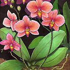 Phalaenopsis Orchid Study by Carolyn  McFann