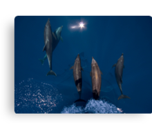 Bow Riders Canvas Print