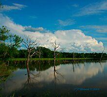 Tree & Cloud reflections by grinandbearit