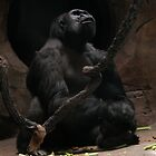 Gorilla by toots