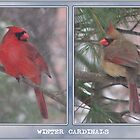 Winter Cardinals by tim100