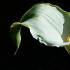 Lily  by Jan Hopgood