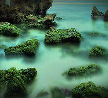 seaweed by alistair mcbride