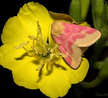 Pink on Yellow night time. by Crokuslabel