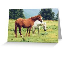 Romanian horses Greeting Card