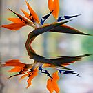 Bird of paradise in flood by Sheila  Smart