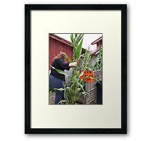 Corn stalks 4 sale Framed Print