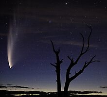 Comet McNaught by Peter Daalder