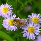 Busy bee by John Thurgood