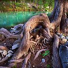 Cypress Roots by Andy Heatwole