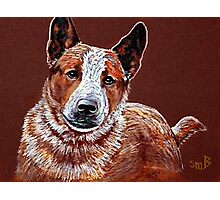 Murphy, The Cow Dog Photographic Print