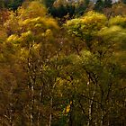 Autumn in the woods and the city by ThomasB