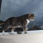 Tabby cat on window sill by turniptowers