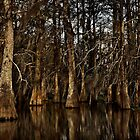 Darkness on the Bayou by cclaude