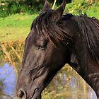 Horse portrait by Bob Martin