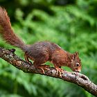squirrel on a branch by Nicole W.