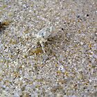 Tiny, tiny crab by MuscularTeeth