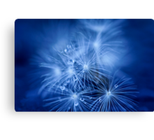 Tiny Fireworks Canvas Print