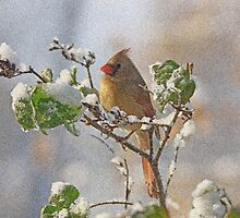 Cardinal on Snowy Branch by Sandy Keeton