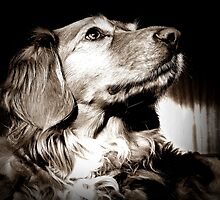 A Dogs Life by mhphotographyuk