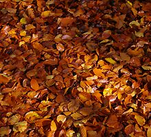 Autumn Carpet 2 by Steve plowman