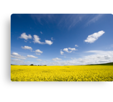 Canola / Rape Seed Field Canvas Print