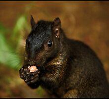 Yummy Nuts pt2 by Glasseye